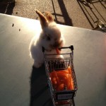 healthy grocery rabbit