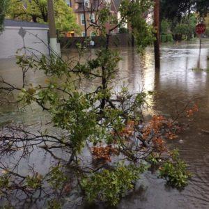 harvey montrose flood